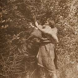 The Berry Picker - Clayoquot (1915)