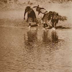 Water Rite Purification, Cheyenne Animal Dance (1927)